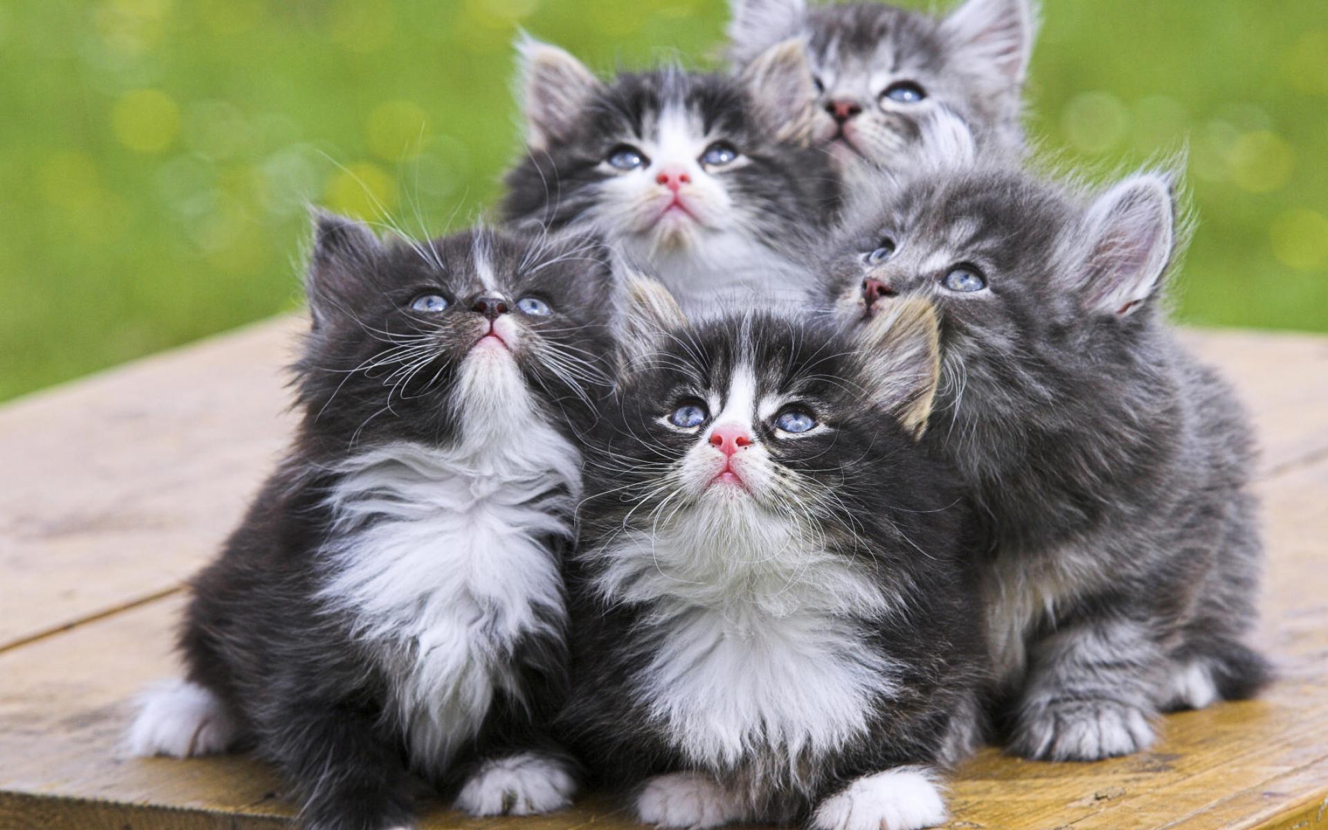 kitten A10