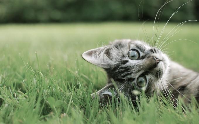 kitten cat cute