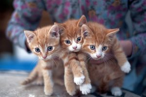 kitten pictures lovely