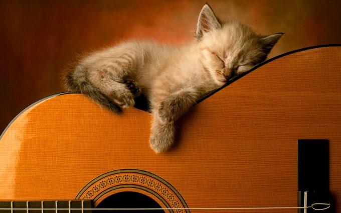 kitties wallpaper