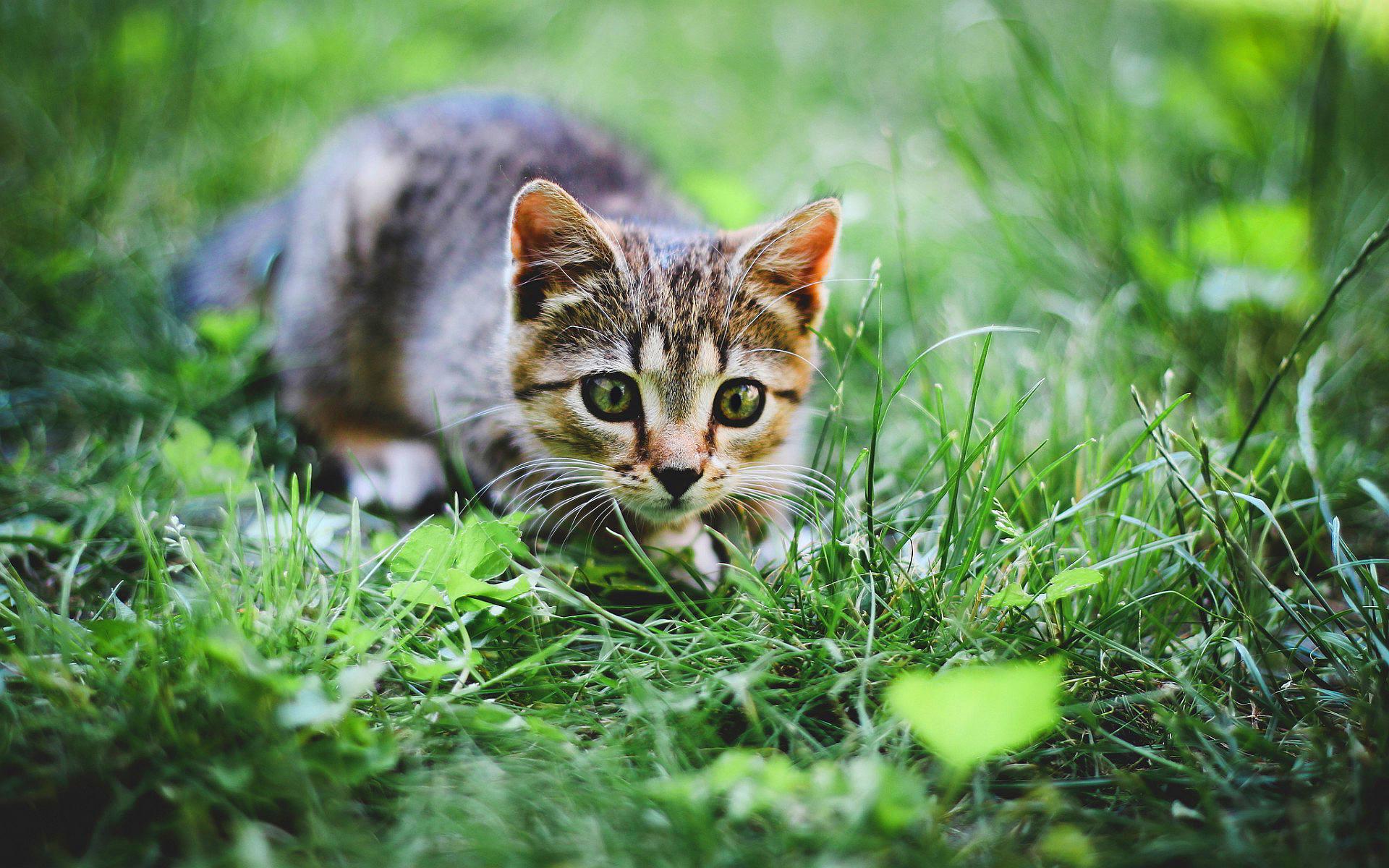 kitties wallpapers