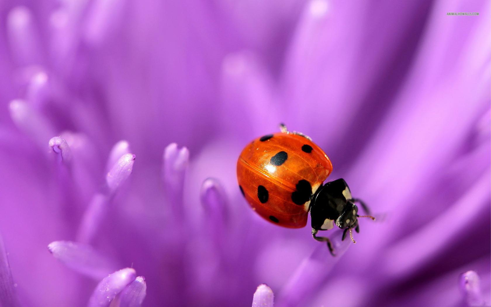 ladybugs images