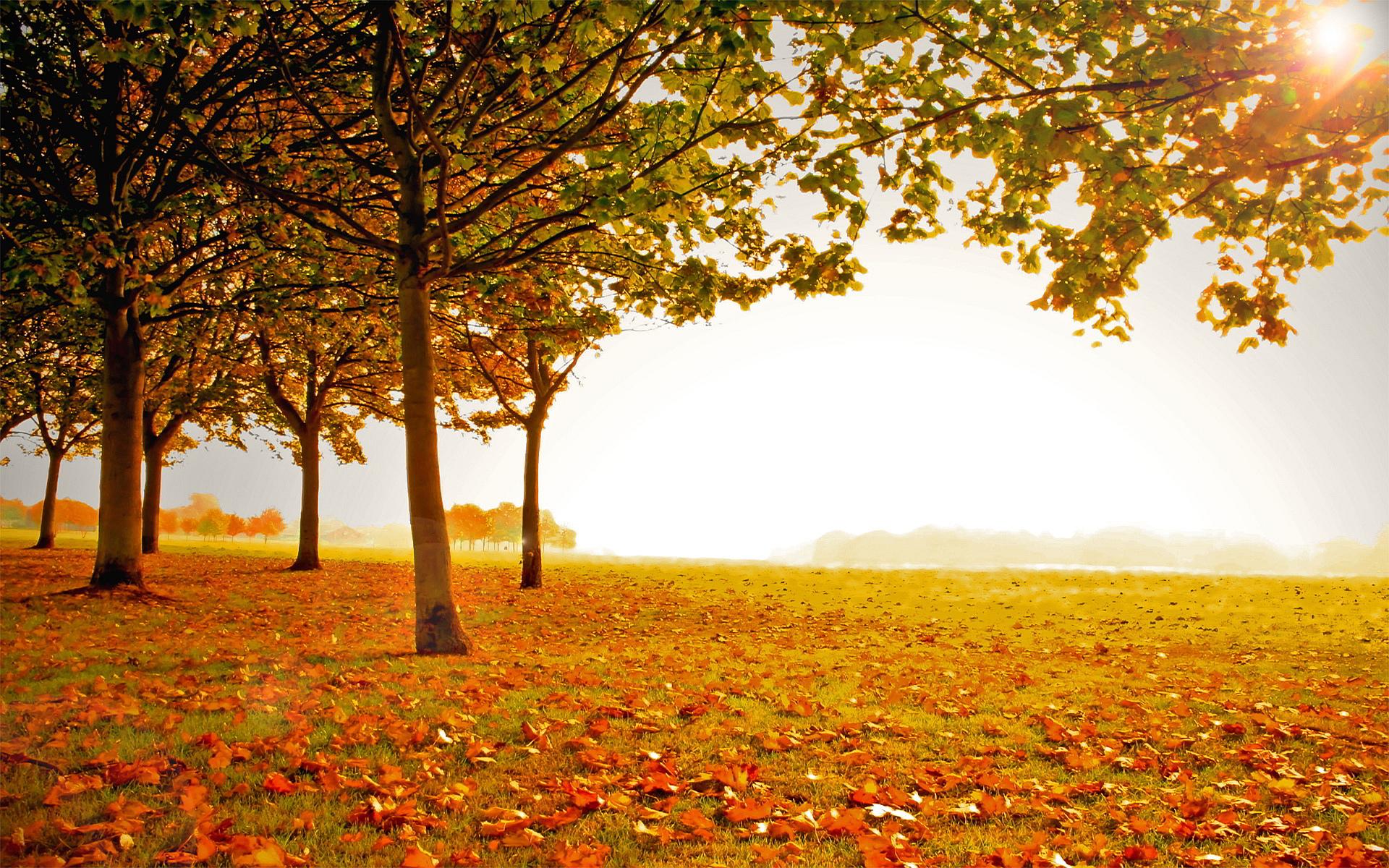 landscape photos autumn