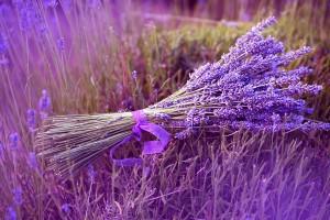 lavender backgrounds