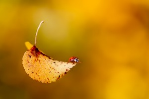 leaf dried pictures