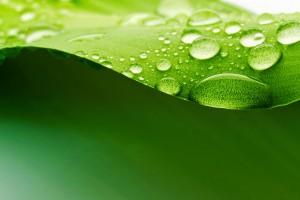 leaf wallpaper 3d