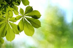 leaf wallpaper desktop