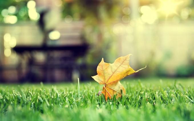 leaf wallpaper free