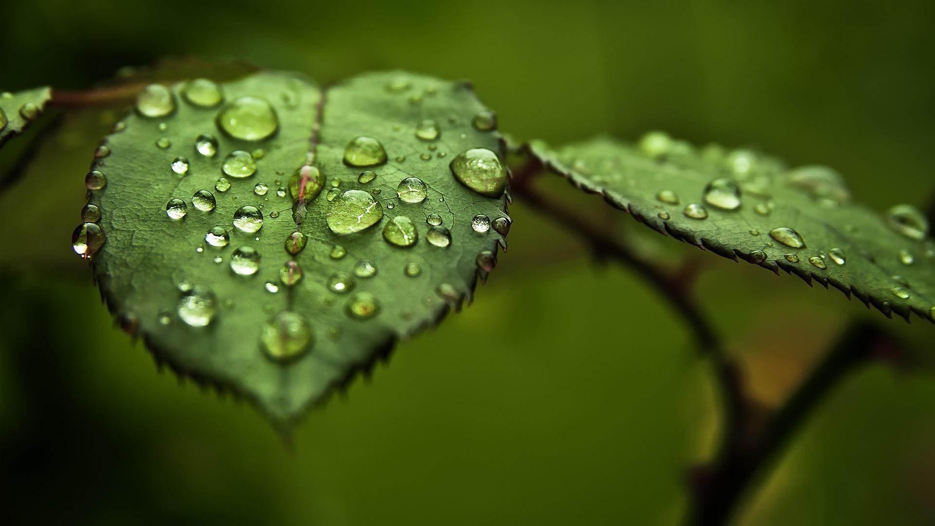 leaf wallpaper green hd