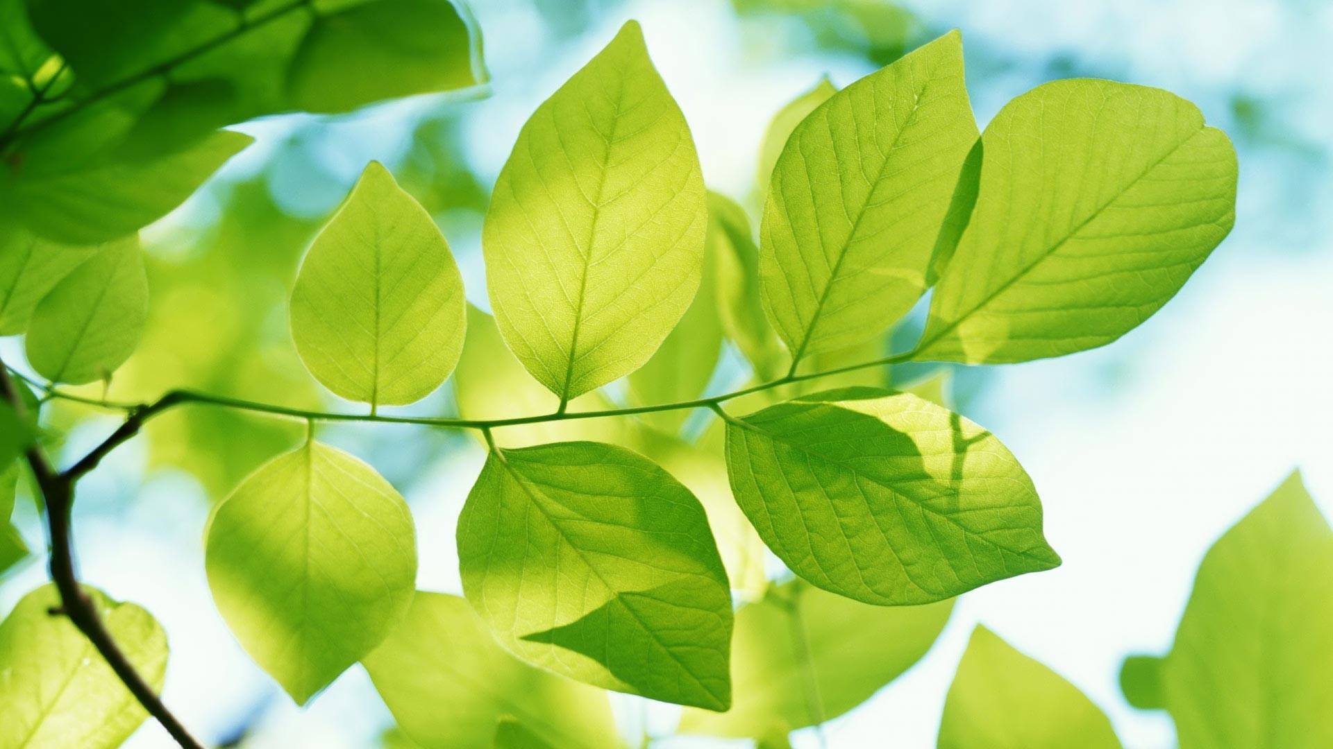 leaf wallpaper ipad