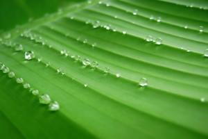 leaf wallpaper live