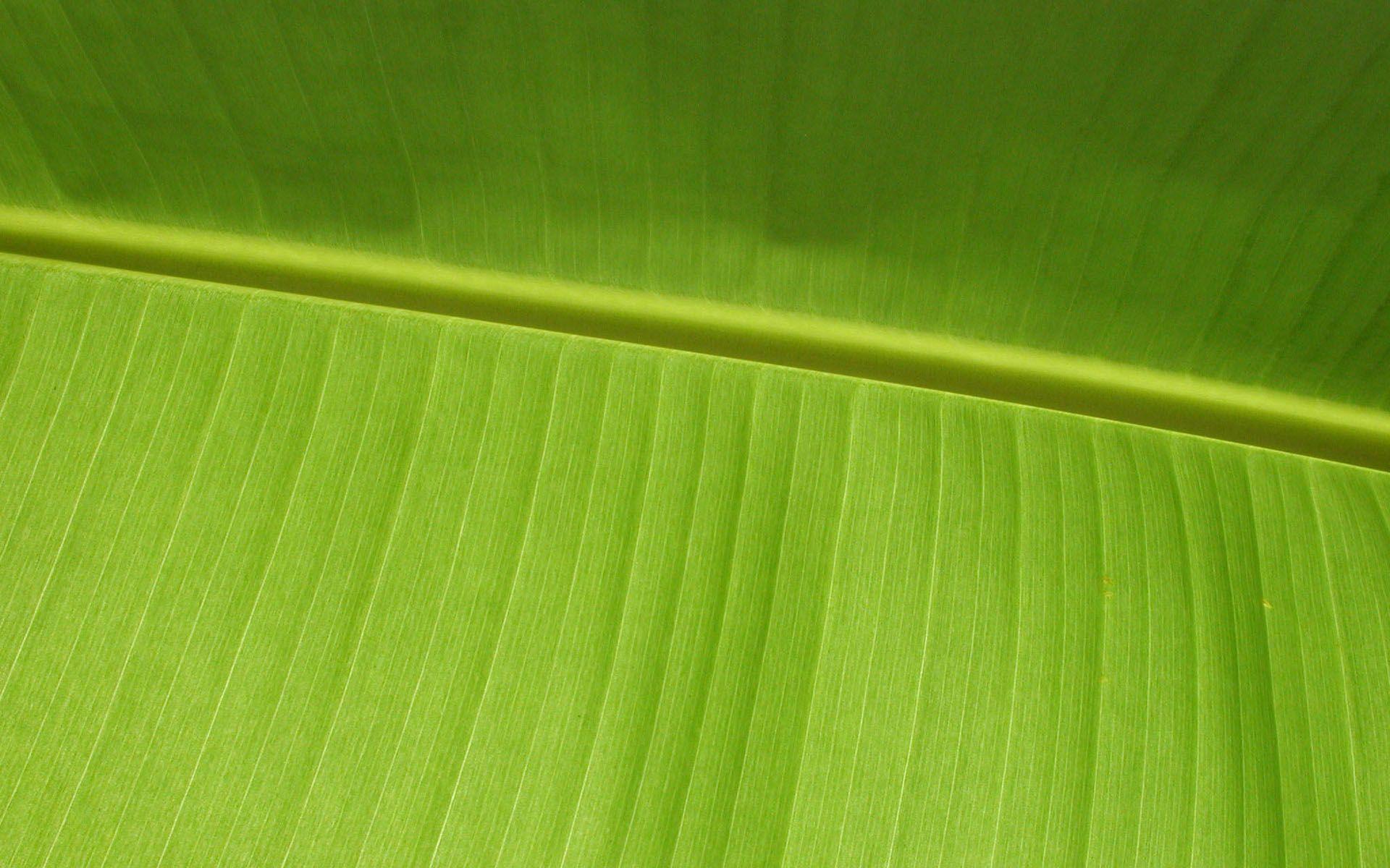 leaf wallpaper plam
