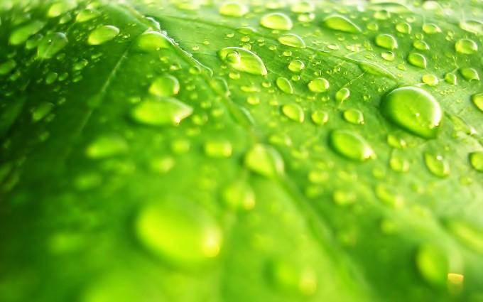 leaf wallpaper rain