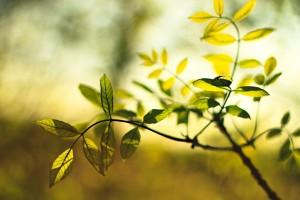 leaves green beautiful