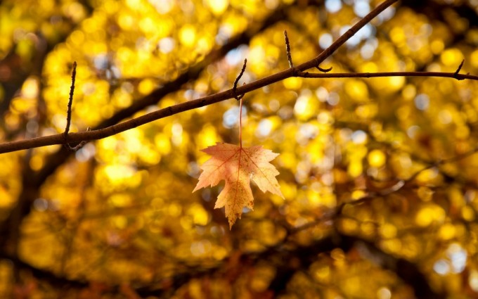 leaves images background