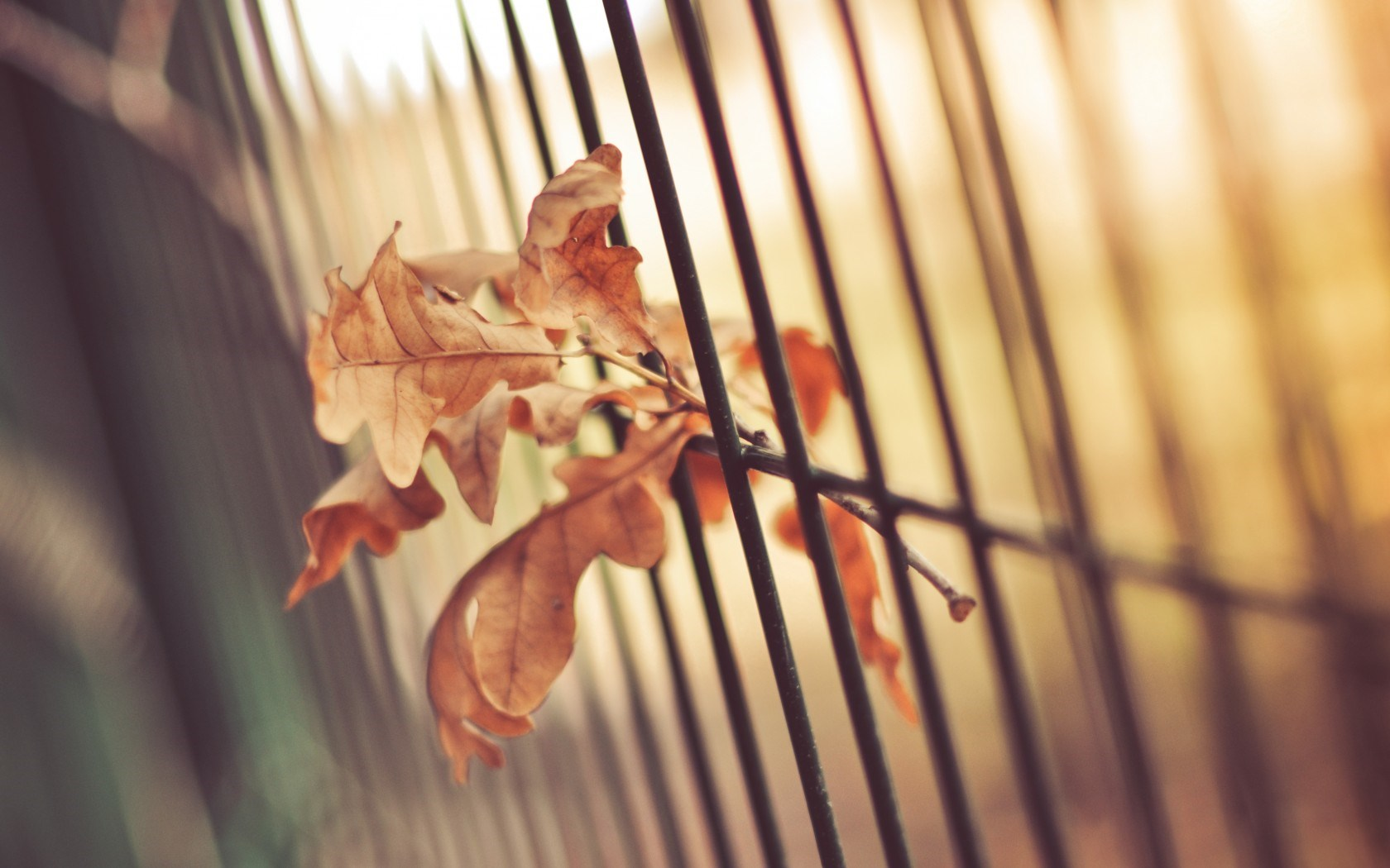 leaves images free