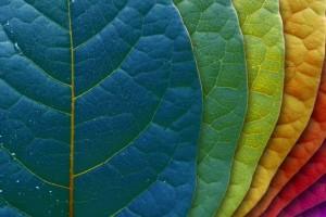leaves images tablet