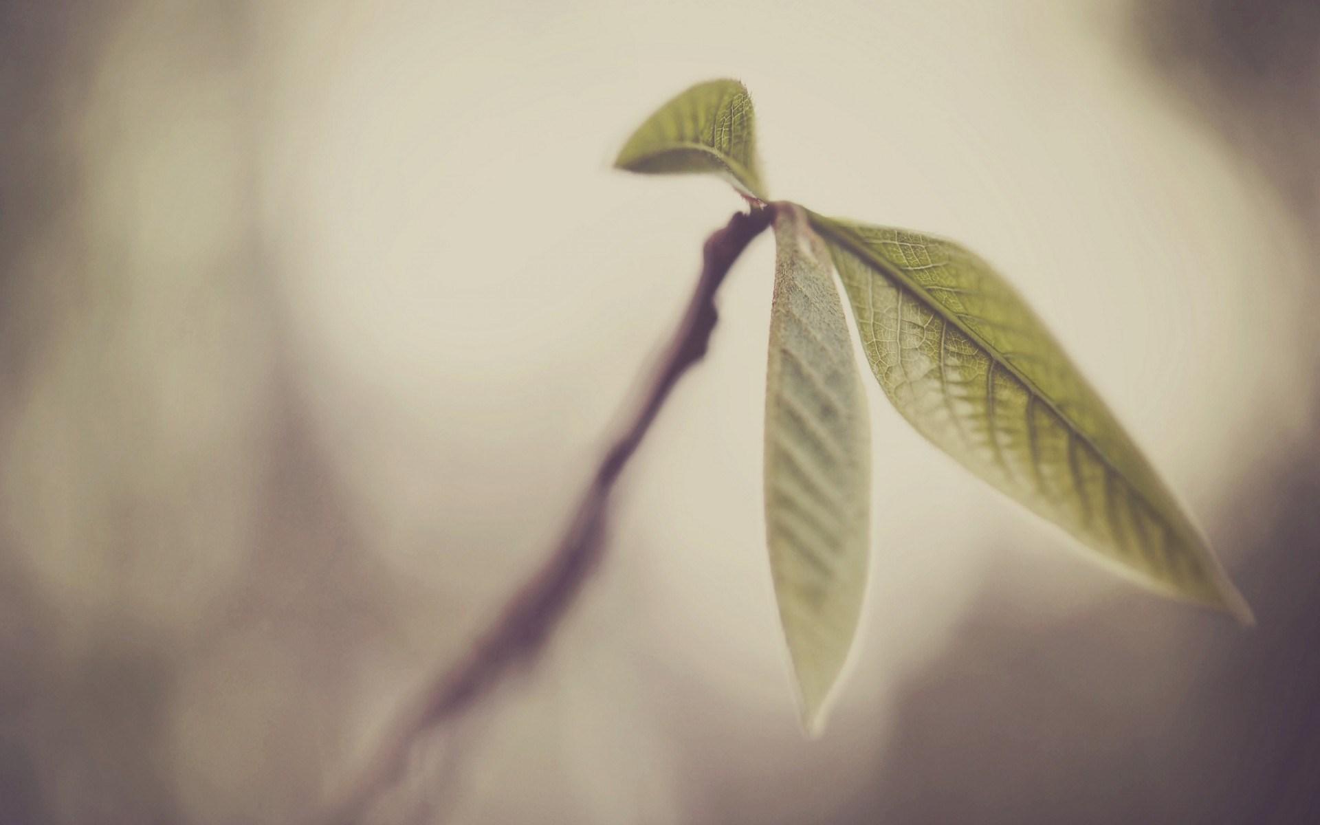 leaves photos