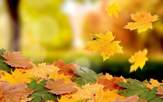 leaves scenery