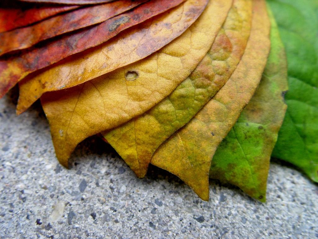 leaves splendid