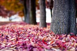 leaves wallpaper desktop