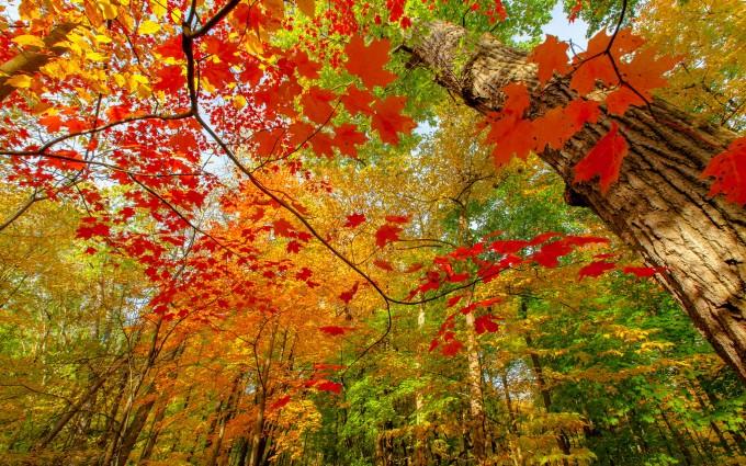 leaves wallpaper for walls