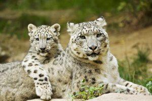 leopard print backgrounds