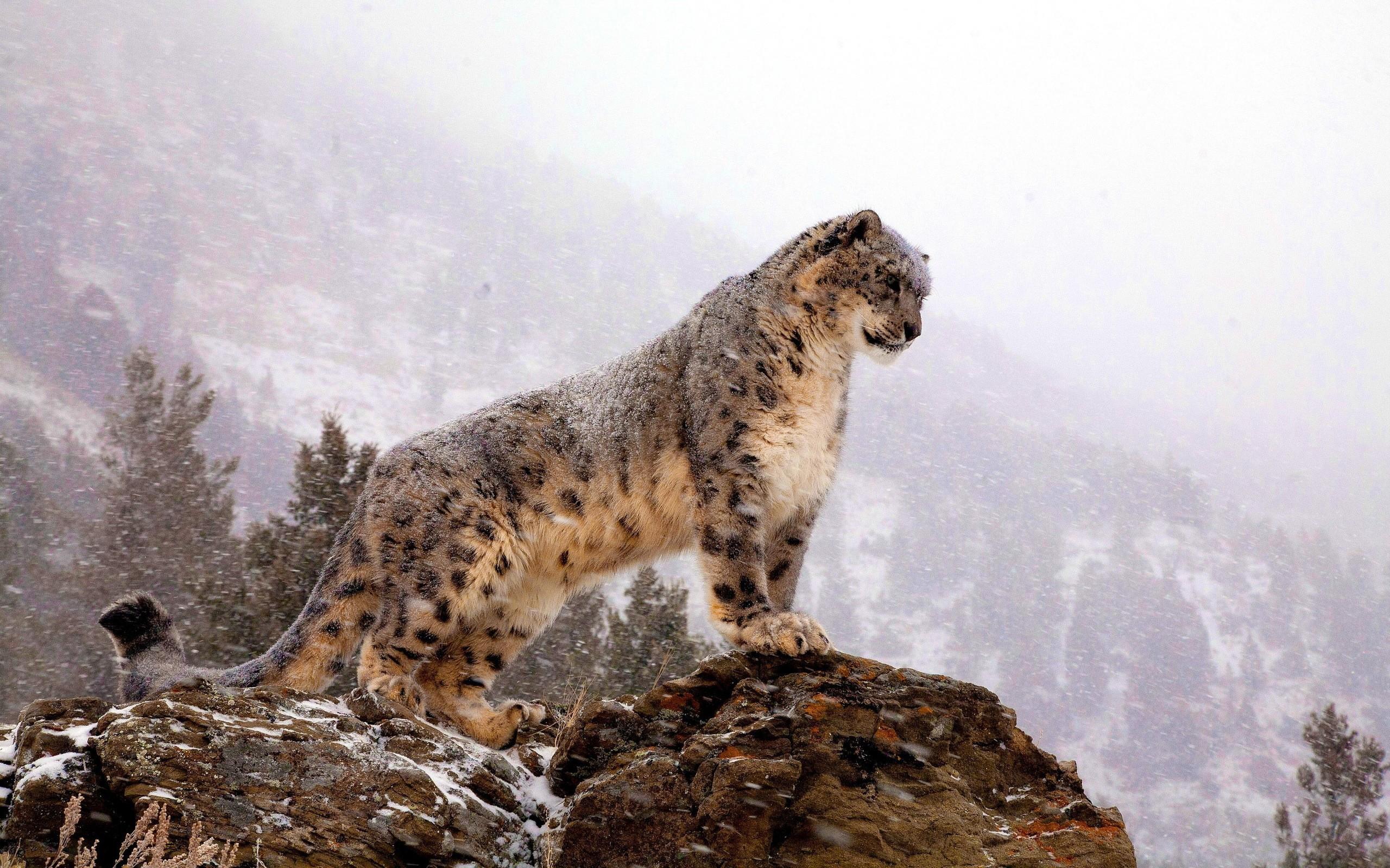 leopard wallpaper cute