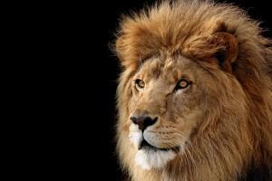 lion image free
