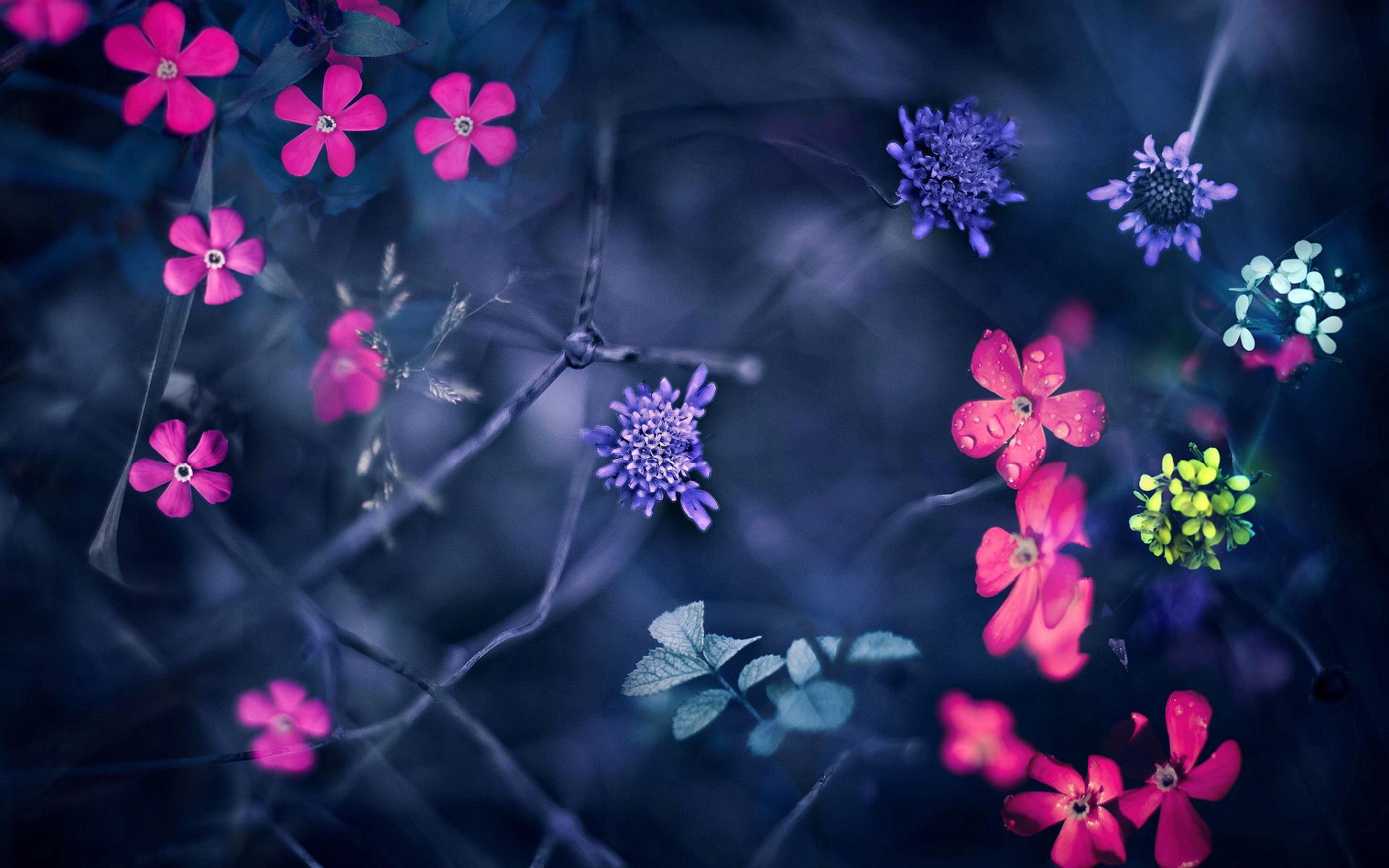 little flowers hd