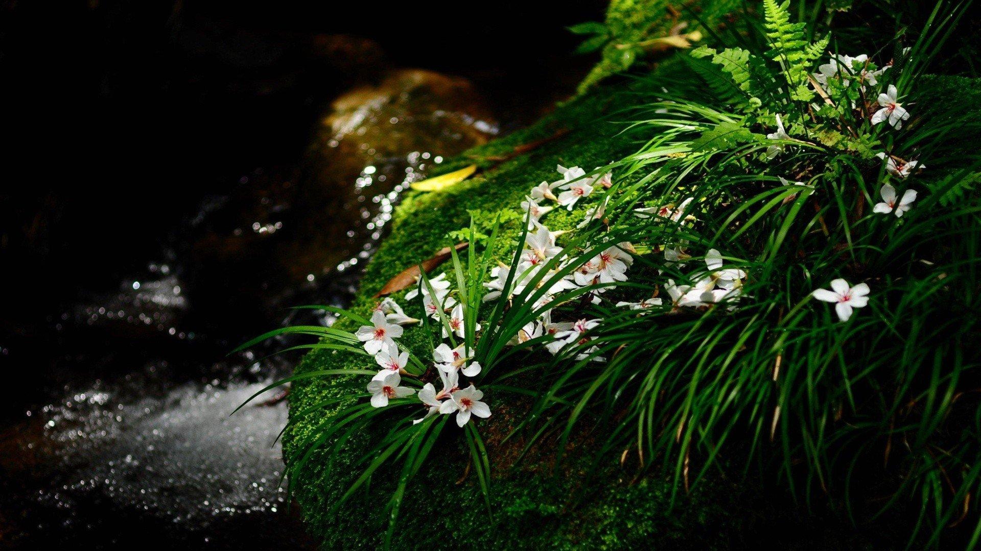 lovely wallpaper flowers