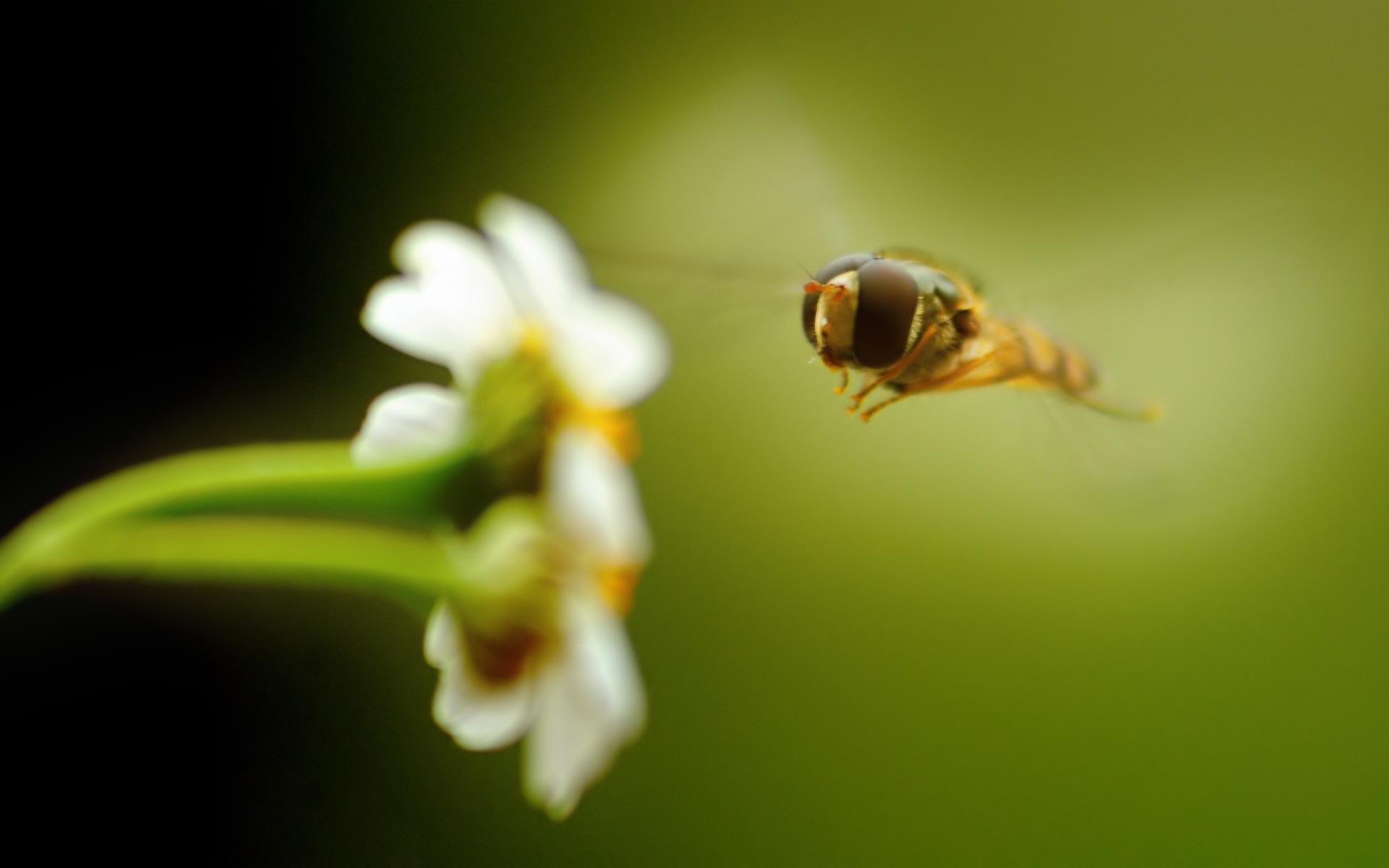 macro photography flower