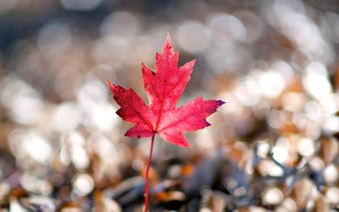 macro wallpaper leaf cute