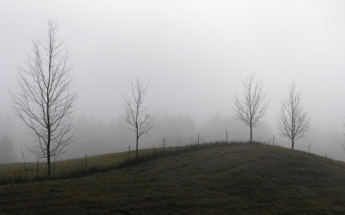 meadow wallpaper foggy winter