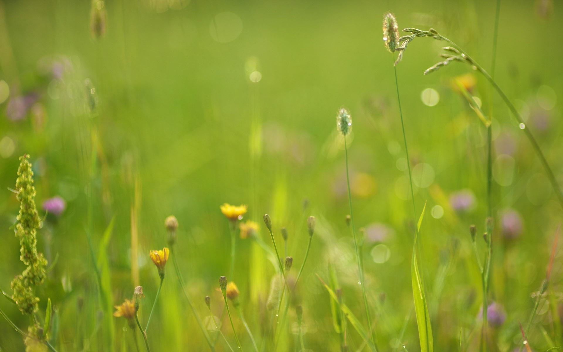 meadow wallpaper green
