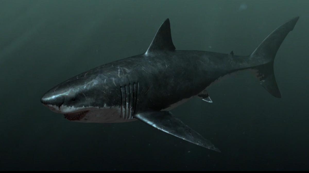 megalodon shark pictures - HD Desktop Wallpapers | 4k HD