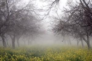 morning fog wallpaper