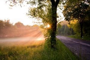 morning sunshine image
