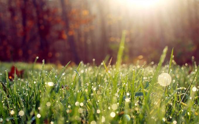 morning wallpaper grass