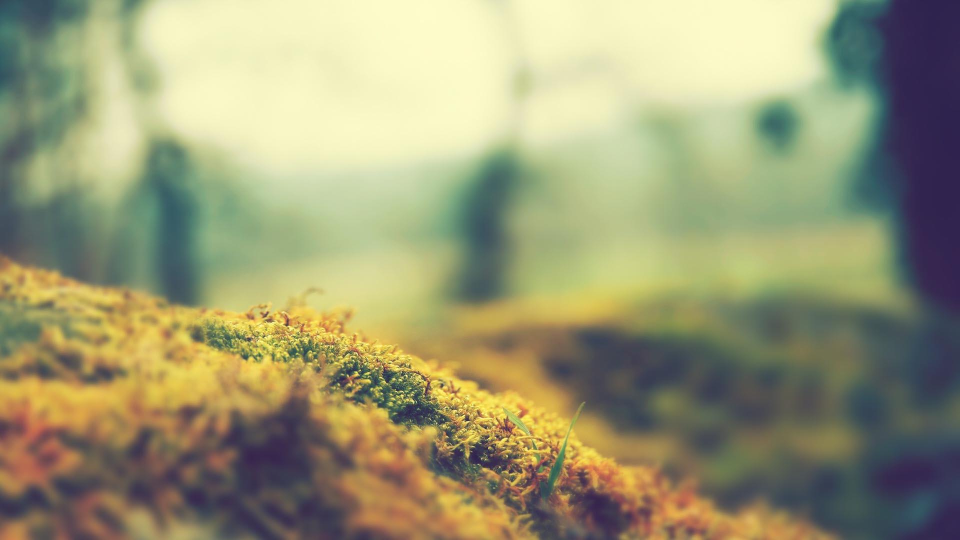 moss wallpaper A2