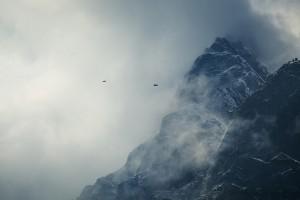 mountain photos birds