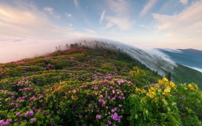 mountain wallpaper foggy hd