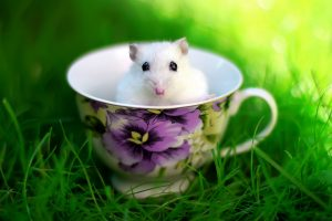 mouse wallpaper funny