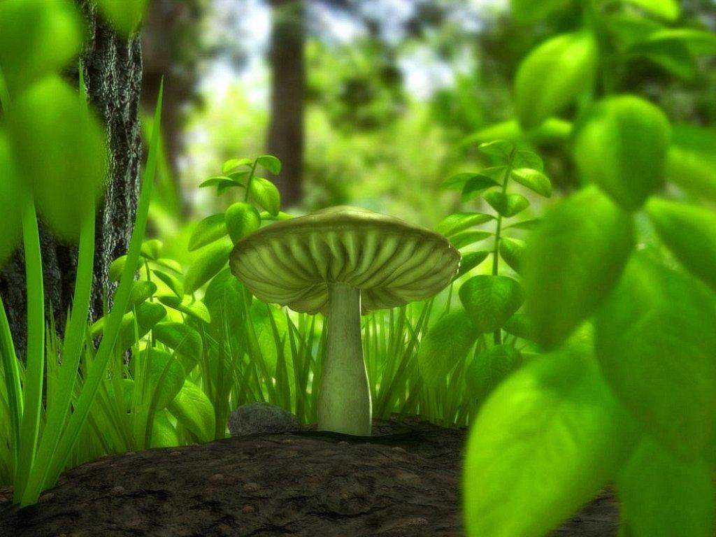 mushroom wallpaper green
