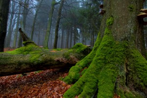 mysterious forest wallpaper hd