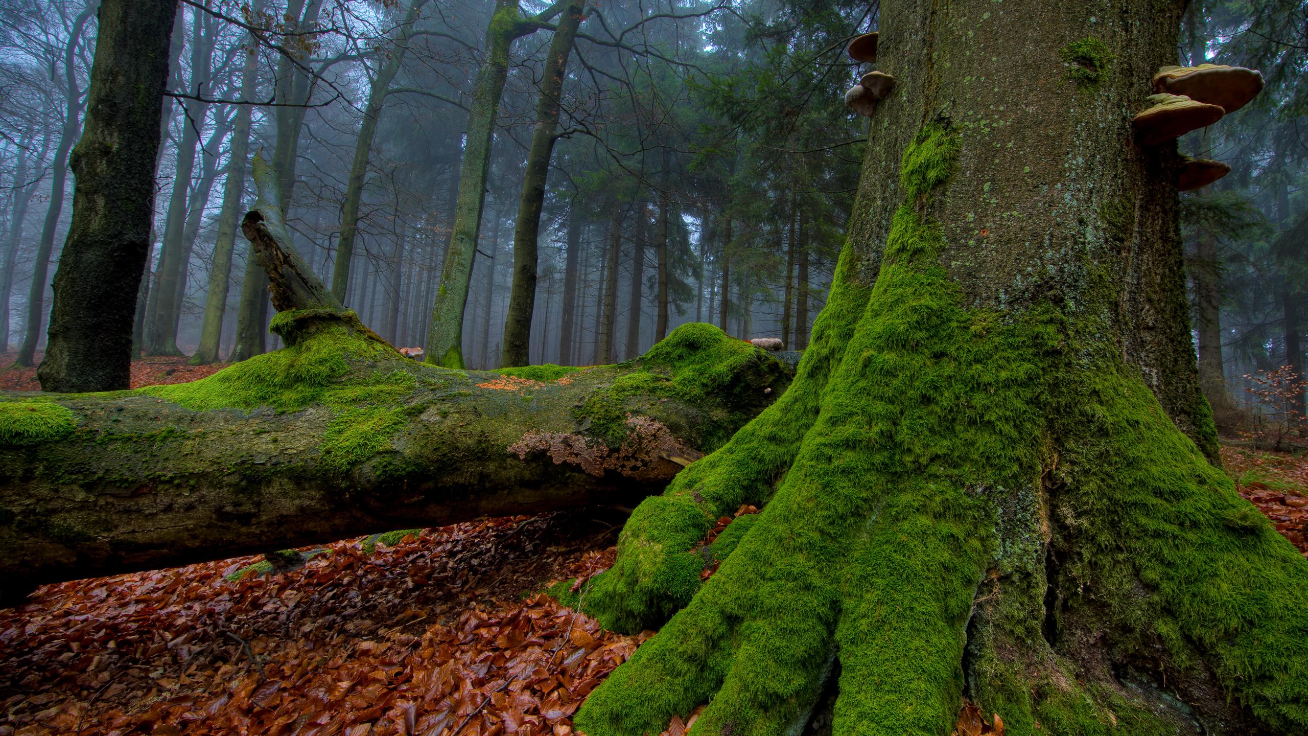 mysterious forest wallpaper hd - HD Desktop Wallpapers | 4k HD