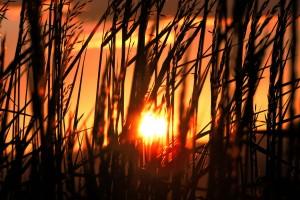 nature sunset hd