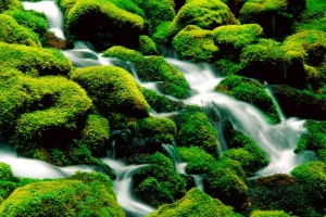 nature wallpaper stream