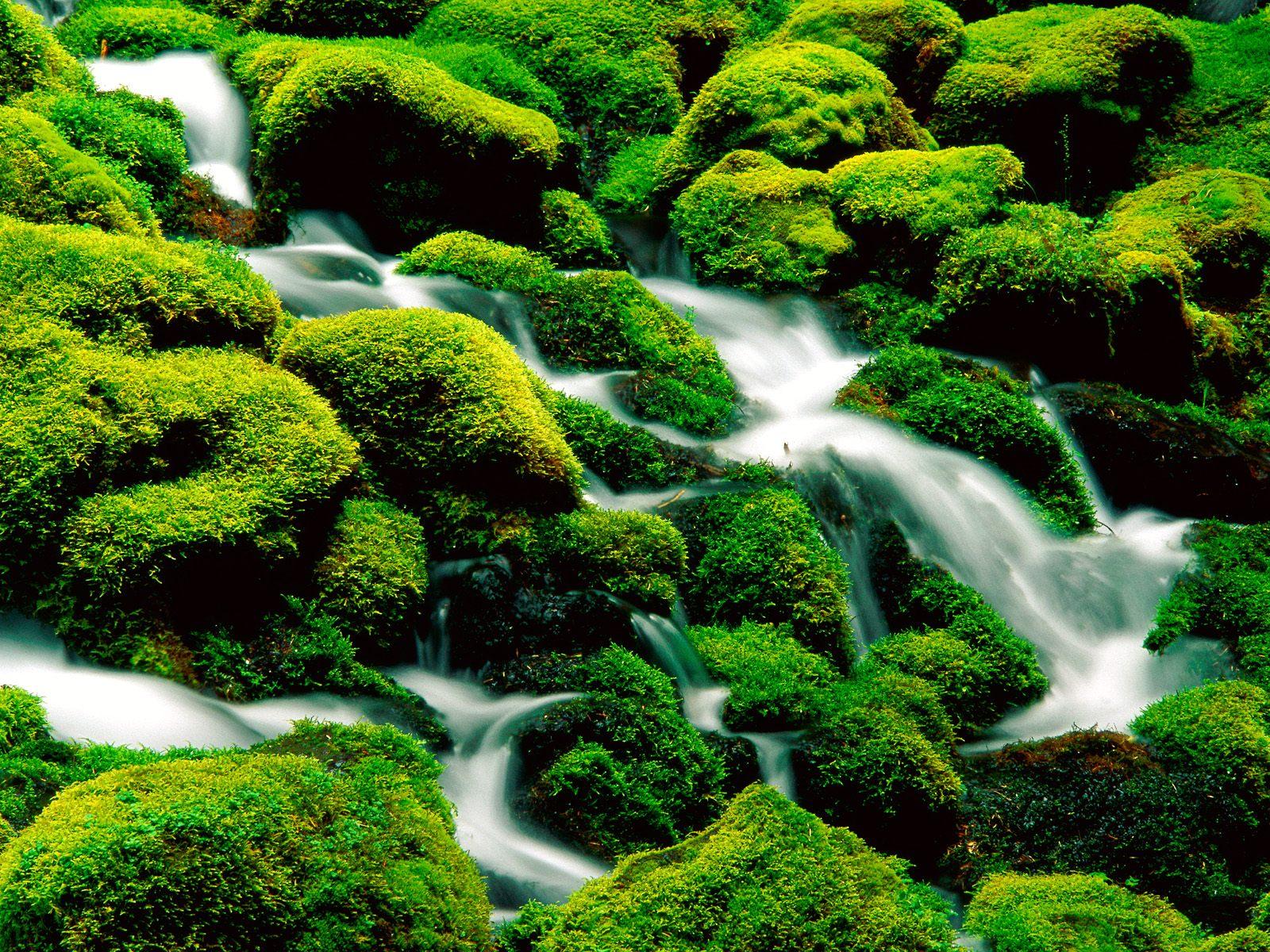 nature wallpaper stream