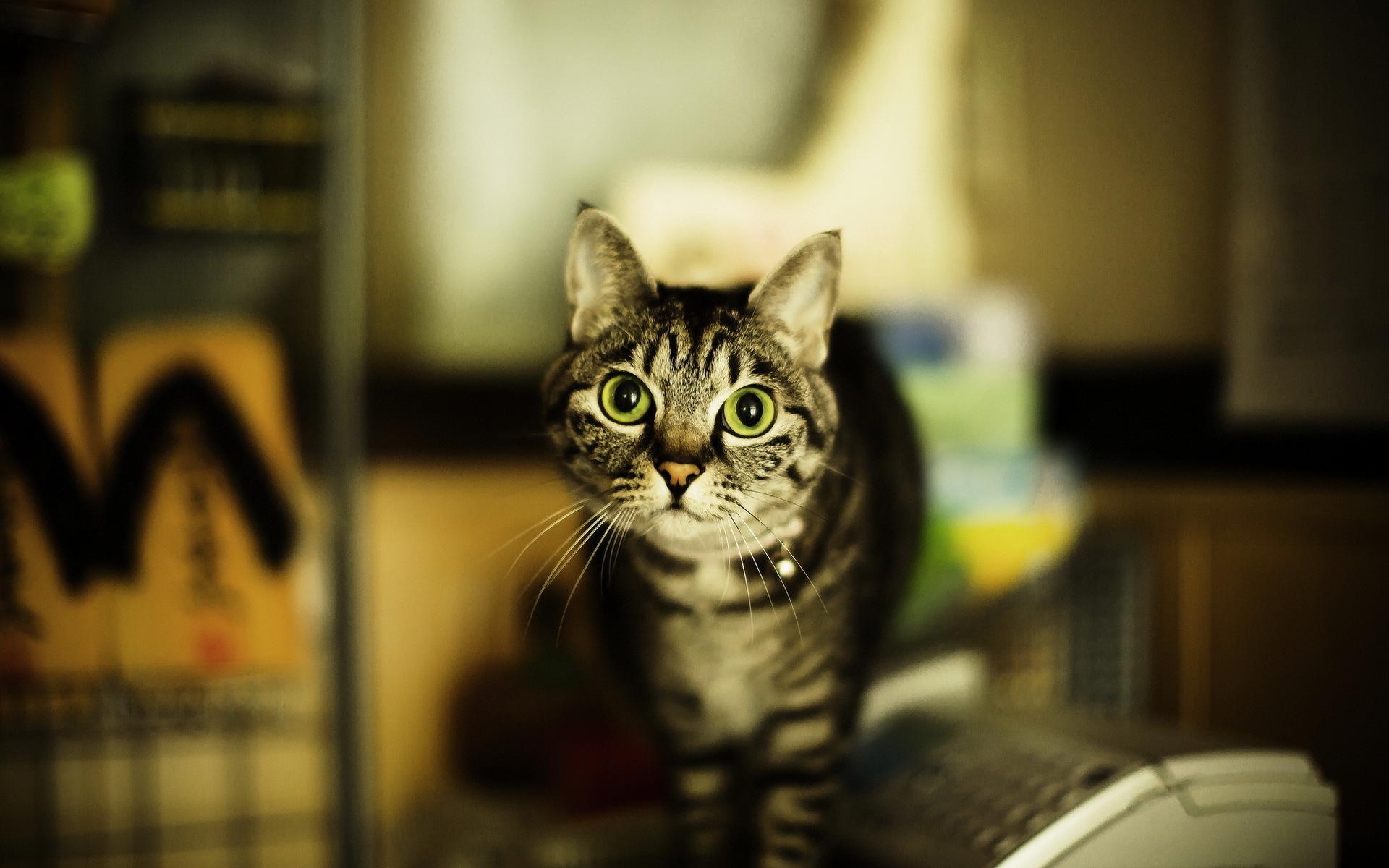 nig cat eyes